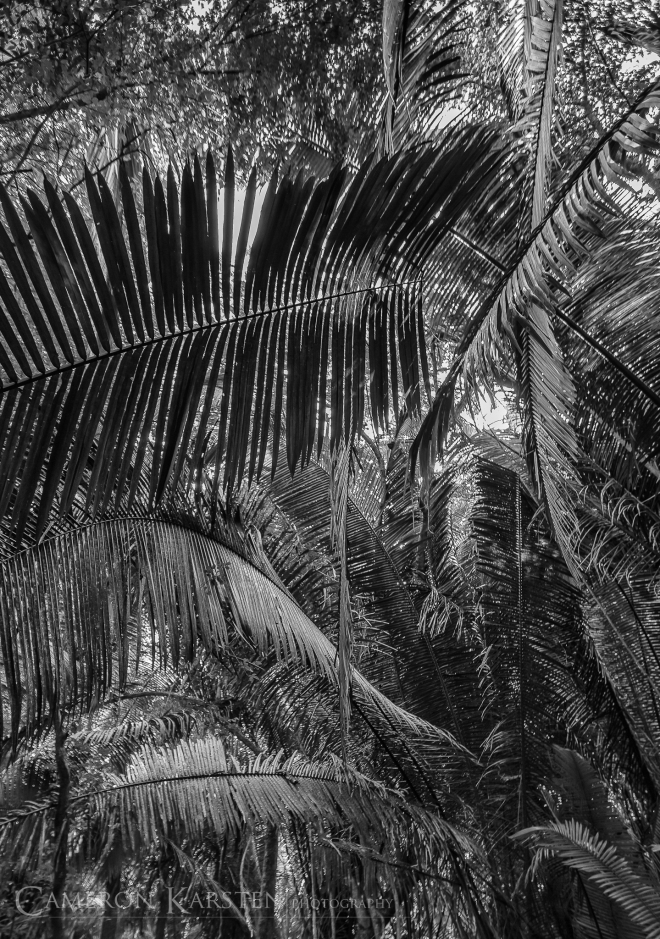Belize2012-636-Edit