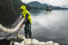 On the SIlver Wave seiner (Bainbridge Island), fishing salmon commercially out of Ketchikan, AK with Grundens