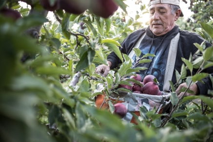 The Nature Conservancy explores the apple harvest and T&T Orchards in Quincy, WA