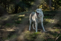 © Cameron Karsten Photography for The Nature Conservancy at Wolf Haven International