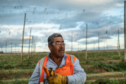 © Cameron Karsten Photography photographs Cornerstone Ranches 2019 hop harvest in Lower Yakima Valley, WA for beer brewing